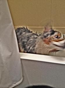 d shake bath