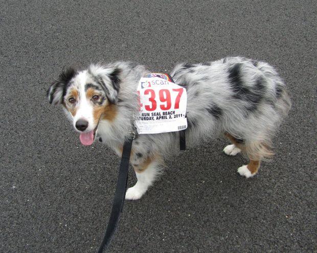 I'm runner #4397!