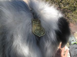 Junior Park Ranger badge