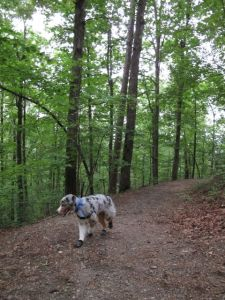 Exploring the trails!