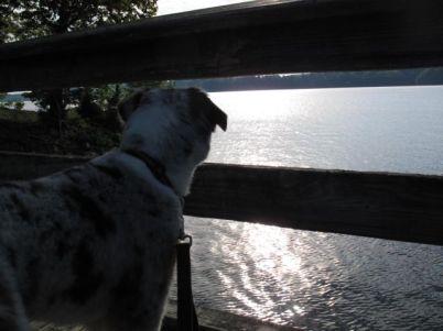 D view of lake