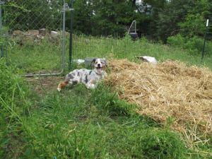 Need help lifting that hay bale?