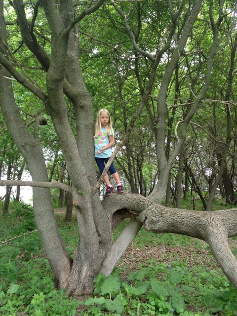 Eleanor in tree 2
